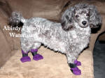 Abby With Purple Boots